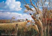 October Memories - Pheasants Limited Edition Canvas By David A. Maass