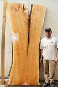 Maple Slab Live Edge Kitchen Table Natural Wood Dine Tabletop Tree Slice 5956a15