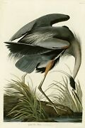 Plate 211 Great Blue Heron Reproduction Havell Edition Double Elephant Folio