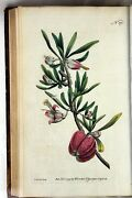 1792 Volumes 5 And 6 Curtis Botanical Magazine 72 Hand Coloured Flower Plates