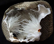 Stunning Natrolite Blow Sprys And Nedels Formation In Geode Rocks Minerals 6.2