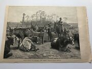 1888 Harpers Print Texan Cattle In A Kansas Corral By Frederic Remington 121819