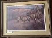Rare Hayden Lambson Signed A/p Remarque Edition Bull Elk And Cows Print 25/25