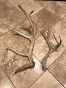 Colorado Elk 5 Point And Mule Deer 4 Point Brown Sheds Lot Of Two