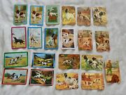 22 Vintage 1950s Trading Cards, Hunting Dogs 3 1/2 X 2 1/4 And 3 1/4 X 2 1/4