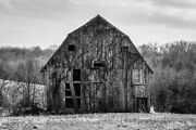 Country Farmhouse Black And White Art Print Of Barn Covered In Vine In Missouri