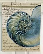 Wrapped Canvas Sea Shell Print Paint Accents Wall Hanging 16 X 20andrdquo Stamp Backgrd