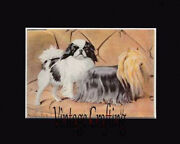 Japanese Spaniel And Yorkshire Terrierfrom Paintings By Louis Agassiz Fuertes