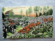 Antique Rhododendrons In Bloom Highland Park Rochester New York Postcard 1919