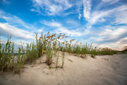 Coastal Photography Print - Picture Of Sand Dunes And Sea Oats In South Carolina