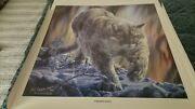 Vivi Crandall Very Rare Sold Out Signed And Numbered Northern Lights