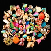 80pcs Natural Seashells Charms For Diy Bracelets Rainbow Shell Jewelry Findings