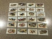 John Player And Sons Ltd Cigarette Cards Dogs Scenic Background 1925