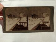 Antique Victorian Stereoview Photo Card Unwelcome Guest Cat And Baby 1902
