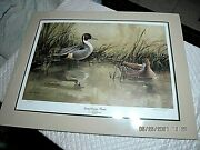 Vtg Ken Carlson Print Matted Spring Domain Pintails Le Signed 1988 1641/5300