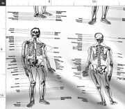 Skeleton Anatomical Study Illustration Black And Spoonflower Fabric By The Yard