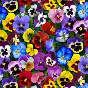 Fabric By The Yard Cotton Multi Pansies Quilting 1/4 1/3 Half Fat Quarter