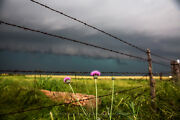 Country Photography Print - Picture Of Wildflower And Barbed Wire Fence In Texas