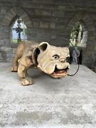 Antique French 1890s Bull Dog Paper Mache Growler Nodder Toy Large 26andrdquo L