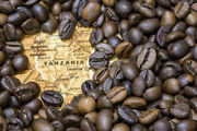 Up To 15 Lbs Tanzanian Mondul Estate Northern Peaberry Coffee Beans, Fresh Daily
