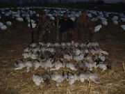 Spring Snow Goose Hunt Mound City Mo Nw Mo So Dak Fully Guided Bands Decoy