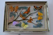 Collection 8 Pcs Dried Butterflies Under Painted Glass And Frame Rio De Janeiro