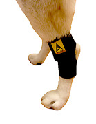Canine Dog Pet Compression Wrap Injury Rear Legs Hock Brace Hips Joints Preowned
