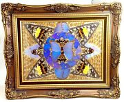 Vintage Real Moth Butterfly Wings Natural Art Taxidermy Kaleidoscope Framed J890