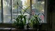 Complete Plant Starter Kits Quality Family Time Lots Of Options