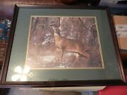 Buck Deer In The Snow And Woods Framed And Matted Print