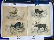 19thc Hand-colored Wildlife Engravings-4 Choices Stewart/lizars. 2 Moose Sold