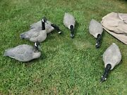 Dakota Decoy Upright Canada Geese Without Stand – 6 Pack