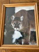 Vintage Tom Mussehl Photograph Photography Mountain Lion Framed Art