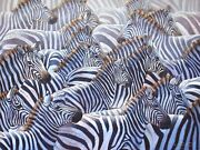 Synergy African Zebra Herd - Limited Edition Giclee Canvas Safari Wildlife Print