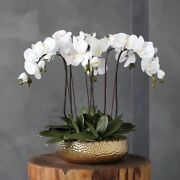 Vicky Yao-real Touch Artificial Phalaenopsis Orchid With Golden Pot 6stemsh55cm