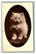 Vintage 1900's Mt Shehan Photo Postcards Cute Kittens Cat In The Hat