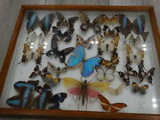 28x Butterflies Framed Taxidermy Insect Wooden Picture Display Frame Genuine