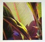 03 Hawaii Photo Print Tall Cannes And Bird Of Paradise By Sal Sterling Ahb