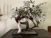 Vintage Artificial Bonsai Tree Cherry Blossom 21x25 Early 50and039s