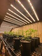 640w 8 Bars Full Spectrum Led Grow Light Kit Hydroponics Replaces 8000w Mh And Hps