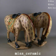15.7 Chinese Old Antique Porcelain A Pair Tang Dynasty Sancai Horse Statue
