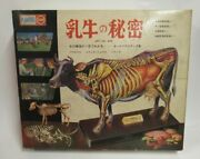 Dairy Cow Secret Art No. 499 All Plastic Model Kit Marusan With Box Unassembled