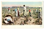 Ppc,in The Land Of 'king Cotton' Picking.detroit Publishing Co.black Americana