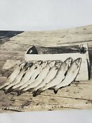C 1944 Fish Lake Trout Caught On Light Tackle In Lake Superior Bayfield Wi Rppc
