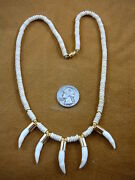 G170-114 Five Gold Capped 1 Alligator Tooth Teeth Aceh Bovine Bead Necklace