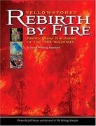 Yellowstones Rebirth By Fire Rising From The Ash