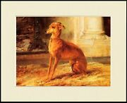 Italian Greyhound Seated By Fire Charming Dog Print Mounted Ready To Frame