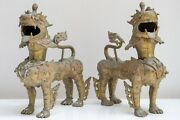 Antique Pair Brass Foo Dogs Asian Art Sculpture Exceptional And Superb Quality