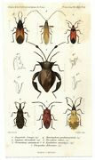 Antique 1860 Hand Colored Entomology Print Insects Natural History Science Pl.14
