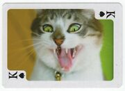 1 Playing Swap Card - Crazy Laughing Cross-eyed Cat [2854]